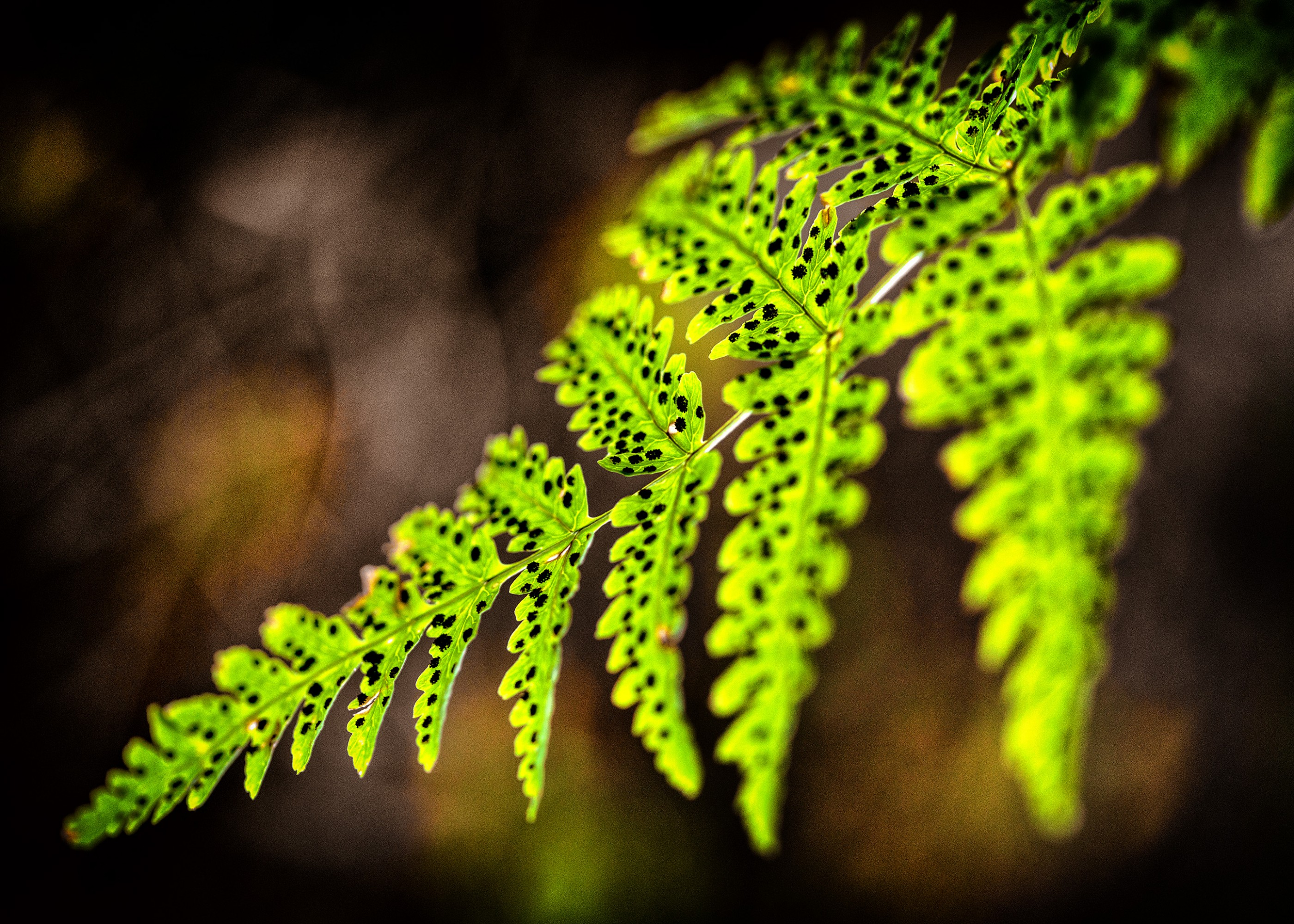 forest-fern-glacier-national-park-ash-newell