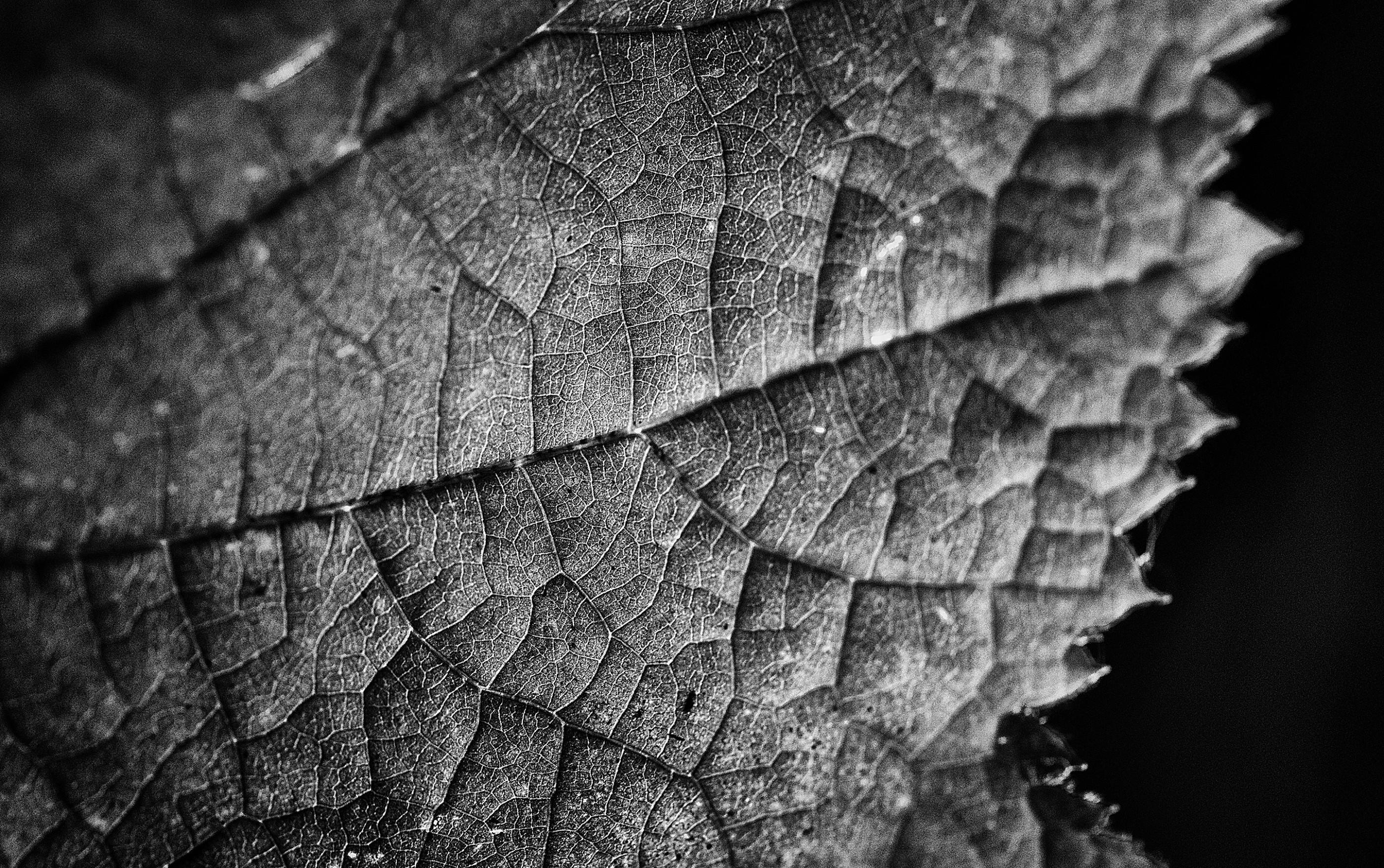 leaf-texture-bnw-fine-art-ash-newell
